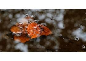 地球,叶子,自然,水,气泡,壁纸,