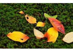 地球,叶子,壁纸,(1)