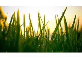 地球,草,绿色的,壁纸,(2)