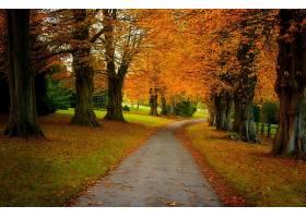 地球,秋天,树,叶子,小路,壁纸,