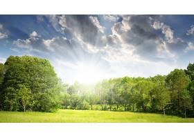 地球,领域,树,绿色的,壁纸,