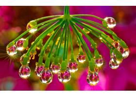 地球,水,滴,花,自然,弹簧,壁纸,