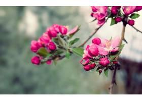 地球,花,花,花,自然,弹簧,壁纸,