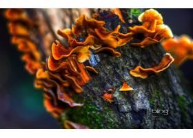 地球,蘑菇,巨,橙色的,壁纸,