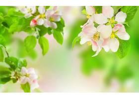 地球,花,花,绿色的,壁纸,(1)