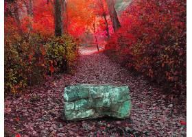 地球,秋天,叶子,小路,壁纸,