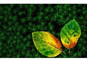 地球,叶子,壁纸,(220)