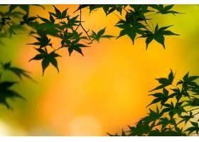 地球,叶子,秋天,Bokeh,壁纸,
