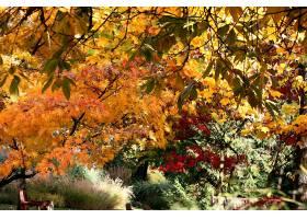 地球,叶子,秋天,壁纸,(5)