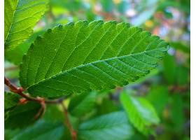 地球,叶子,绿色的,植物,壁纸,