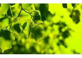 地球,叶子,壁纸,(37)