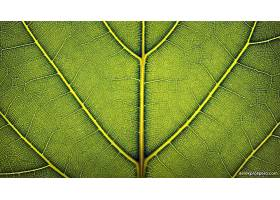 地球,叶子,自然,壁纸,(2)