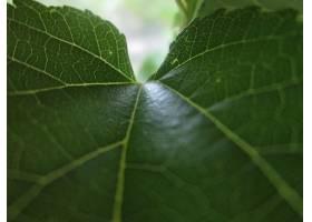 地球,关闭,起来,叶子,自然,绿色的,特写镜头,植物,巨,壁纸,