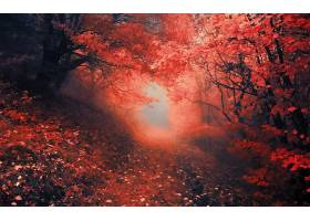 地球,森林,小路,壁纸,