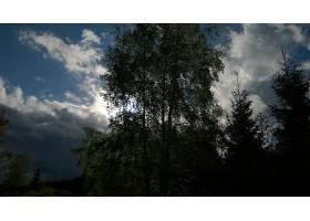 地球,树,树,天空,云,壁纸,