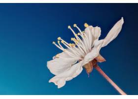 地球,花,花,巨,白色,花,壁纸,(1)