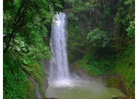 地球,瀑布,瀑布,岩石,树,绿色的,壁纸,(1)