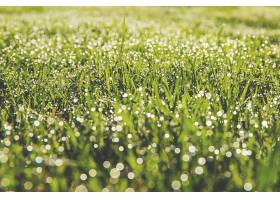 地球,草,自然,巨,绿色的,Bokeh,露水,滴,壁纸,
