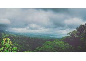 地球,风景,树,叶子,天空,云,壁纸,