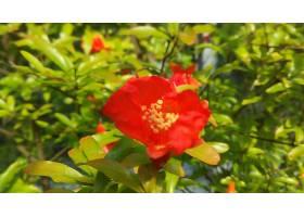 地球,花,花,绿色的,特写镜头,红色,花,壁纸,