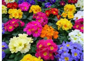 地球,淡黄色,花,彩色,粉红色,花,黄色,花,白色,花,蓝色,花,红色,