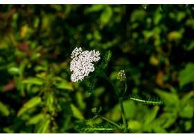 地球,花,花,自然,白色,绿色的,特写镜头,壁纸,