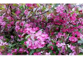地球,花,花,花,树枝,弹簧,粉红色,花,壁纸,