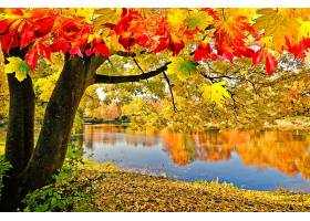 地球,湖,湖,树,秋天,叶子,反射,壁纸,(1)