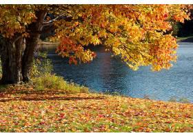 地球,湖,湖,树,秋天,叶子,壁纸,