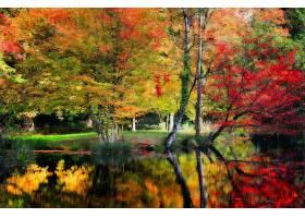 地球,反射,树,秋天,叶子,湖,壁纸,