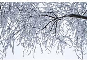 地球,冬天的,树枝,雪,冰,壁纸,