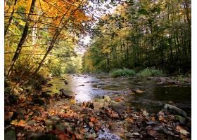 地球,河,秋天,叶子,水,树,壁纸,