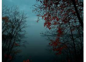 地球,雾,森林,秋天,壁纸,