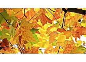 地球,叶子,自然,秋天,壁纸,(2)