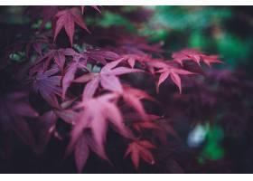 地球,叶子,自然,秋天,壁纸,(8)