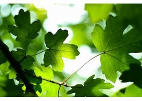 地球,叶子,自然,绿色的,Bokeh,壁纸,
