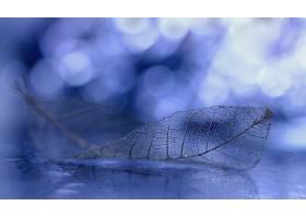 地球,叶子,蓝色,Bokeh,壁纸,