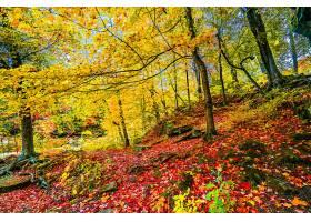 地球,森林,树,秋天,叶子,富有色彩的,壁纸,