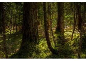 地球,森林,树,绿色的,壁纸,(1)