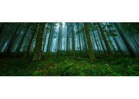 地球,森林,树,绿色的,壁纸,