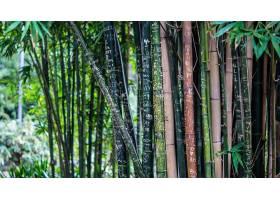 地球,竹子,植物,Bokeh,壁纸,
