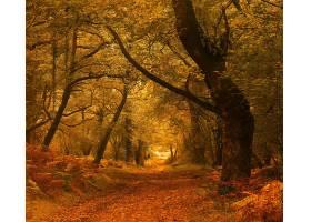 地球,森林,自然,树,秋天,叶子,小路,壁纸,