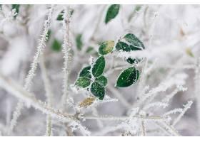 地球,植物,冬天的,叶子,冰冻的,特写镜头,壁纸,