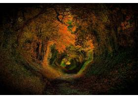 地球,森林,秋天,隧道,叶子,小路,壁纸,
