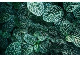 地球,植物,自然,叶子,绿色的,壁纸,(1)