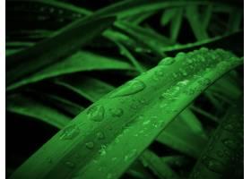 地球,水,滴,叶子,自然,巨,绿色的,壁纸,