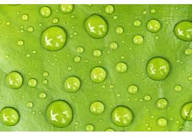 地球,水,滴,巨,绿色的,自然,壁纸,