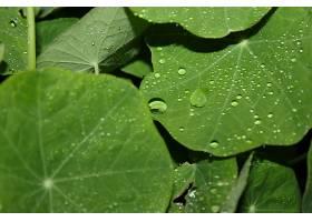 地球,水,滴,自然,叶子,巨,绿色的,壁纸,