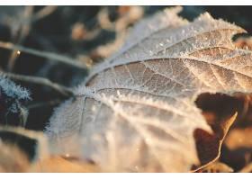 地球,叶子,巨,自然,严寒,壁纸,
