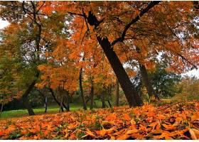 地球,叶子,树,秋天,叶子,壁纸,